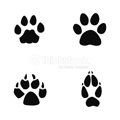 cat, jaguar, dog, fox footprint